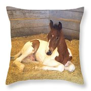 Day Old Colt Throw Pillow