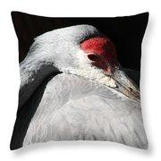 Daydreaming Sandhill Crane Throw Pillow