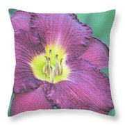 Daylily Collection #26 Throw Pillow