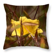 Daylily In Autumn Throw Pillow