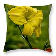 Daylily Picture 469 Throw Pillow