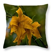 Daylily Picture 474 Throw Pillow