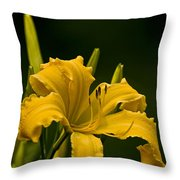 Daylily Picture 539 Throw Pillow