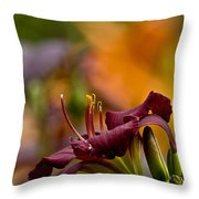 Daylily Pictures 571 Throw Pillow