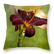 Daylily Pictures 576 Throw Pillow