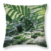 Dazzle Camouflage Patterns In The Garden Throw Pillow