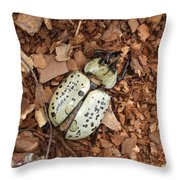 Dead Bug Throw Pillow