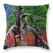 Dead Tree On Cinder At Sunset Crater Throw Pillow