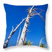 Dead White Trees Throw Pillow