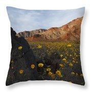 Death Valley Spring 1 Throw Pillow
