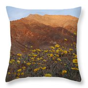 Death Valley Spring 2 Throw Pillow