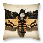 Deaths Head Hawk Moth Framed Version Throw Pillow