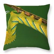 Deaths Head Hawk Moth  Throw Pillow