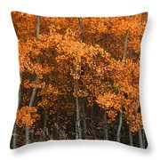 Deciduous Aspen Forest In Fall Throw Pillow