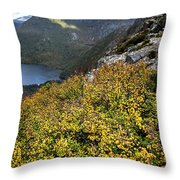 Deciduous Beech Or Fagus In Colour Throw Pillow