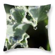 Decorative Kale With Dew Throw Pillow