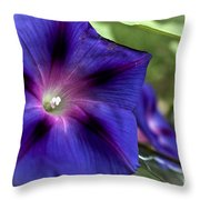 Deep Blue Morning Glories Throw Pillow