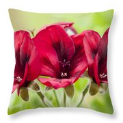 Deep Crimson Pelargonium Throw Pillow