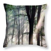 Deep Forest Morning Light Throw Pillow