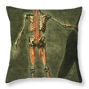 Deep Muscular System Of The Back Throw Pillow