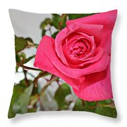 Deep Pink Rose - Summer - Rosebuds Throw Pillow