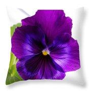 Deep Purple Pansy Throw Pillow