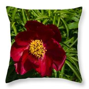 Deep Red Peony With Bright Yellow Stamens  Throw Pillow