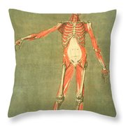 Deeper Muscular System Of The Front Throw Pillow