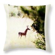 Deer 2 - Buck - White-tailed Throw Pillow