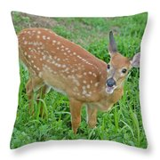 Deer 20 Throw Pillow
