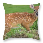 Deer 24 Throw Pillow