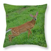Deer 6 Throw Pillow