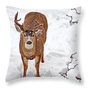 Deer Buck In Snow Throw Pillow