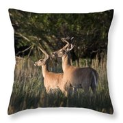 Deer By Belfry Montana Throw Pillow by Roger Snyder