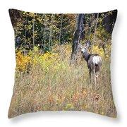 Deer Camoflauged Throw Pillow