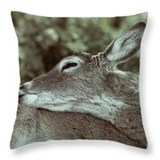 Deer Close-up Throw Pillow