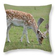 Deer Eating Throw Pillow