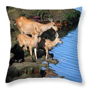 Deer Family By The Ocean At Low Tide Throw Pillow