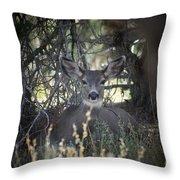 Deer II Throw Pillow