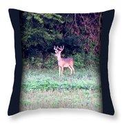 Deer-img-0122-7 Throw Pillow