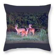 Deer-img-0150-001 Throw Pillow