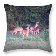 Deer-img-0158-001 Throw Pillow