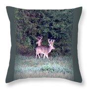 Deer-img-0177-001 Throw Pillow