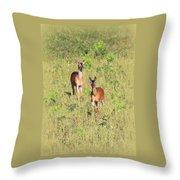 Deer-img-0283-001 Throw Pillow