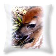 Deer-img-0349-002 Throw Pillow