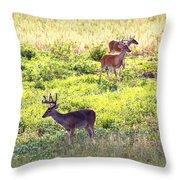 Deer - 0437-004 Throw Pillow