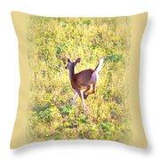 Deer-img-0456-001 Throw Pillow