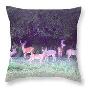 Deer-img-0470-002 Throw Pillow