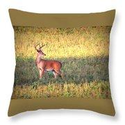 Deer-img-0627-002 Throw Pillow
