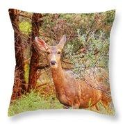 Deer In Forest Throw Pillow